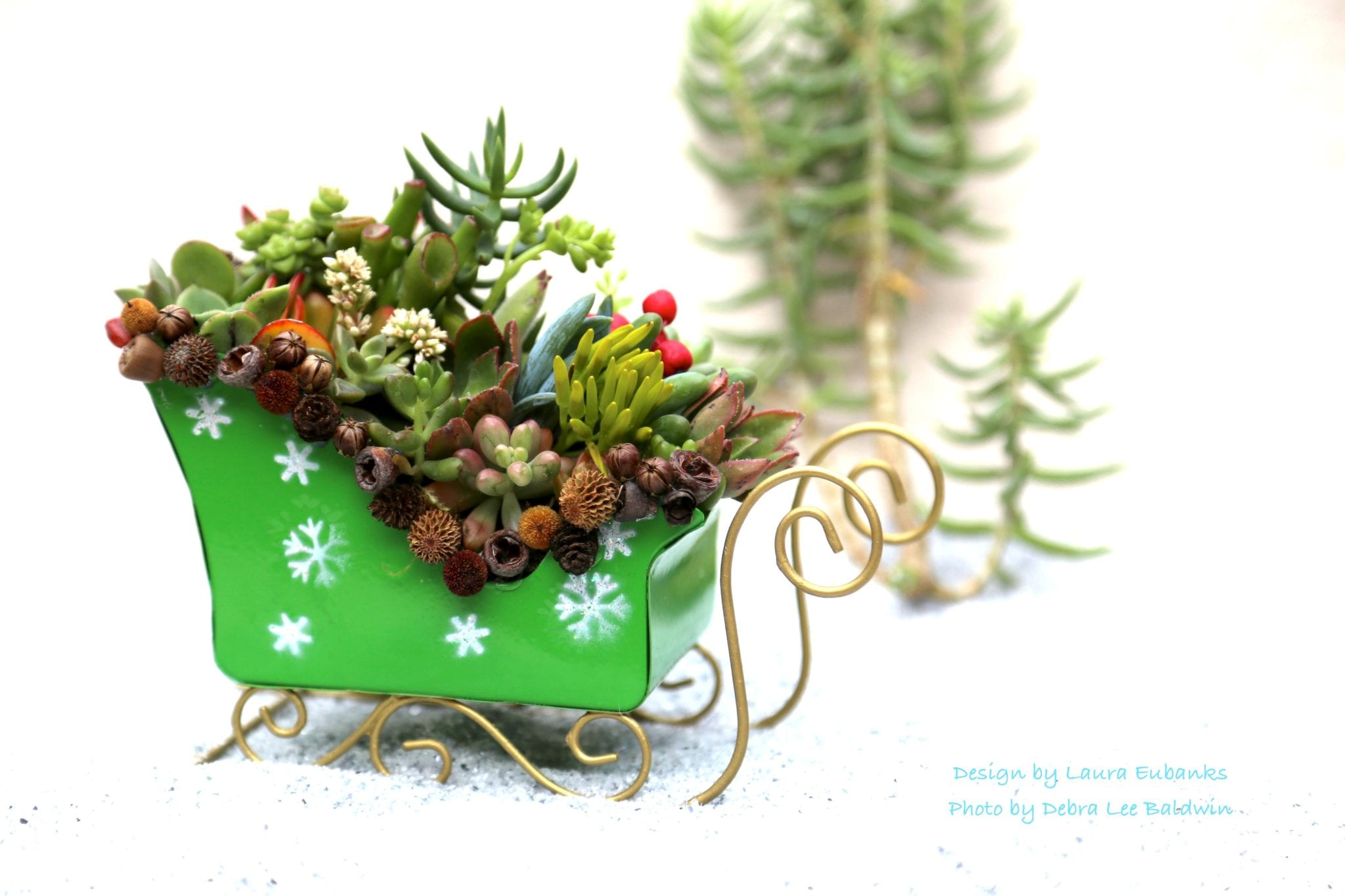Holiday decorating with succulents