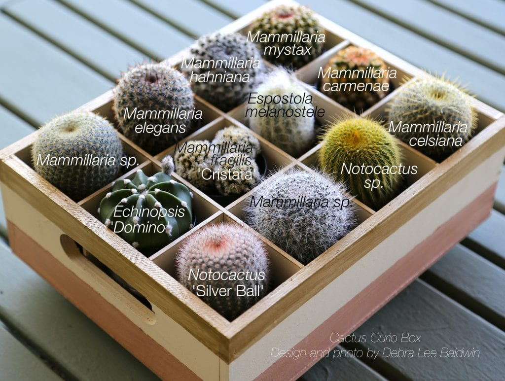 Cactus Curio Box_Latin names